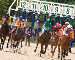 apostas em cavalos